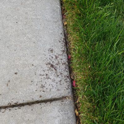 Ants 1of2.