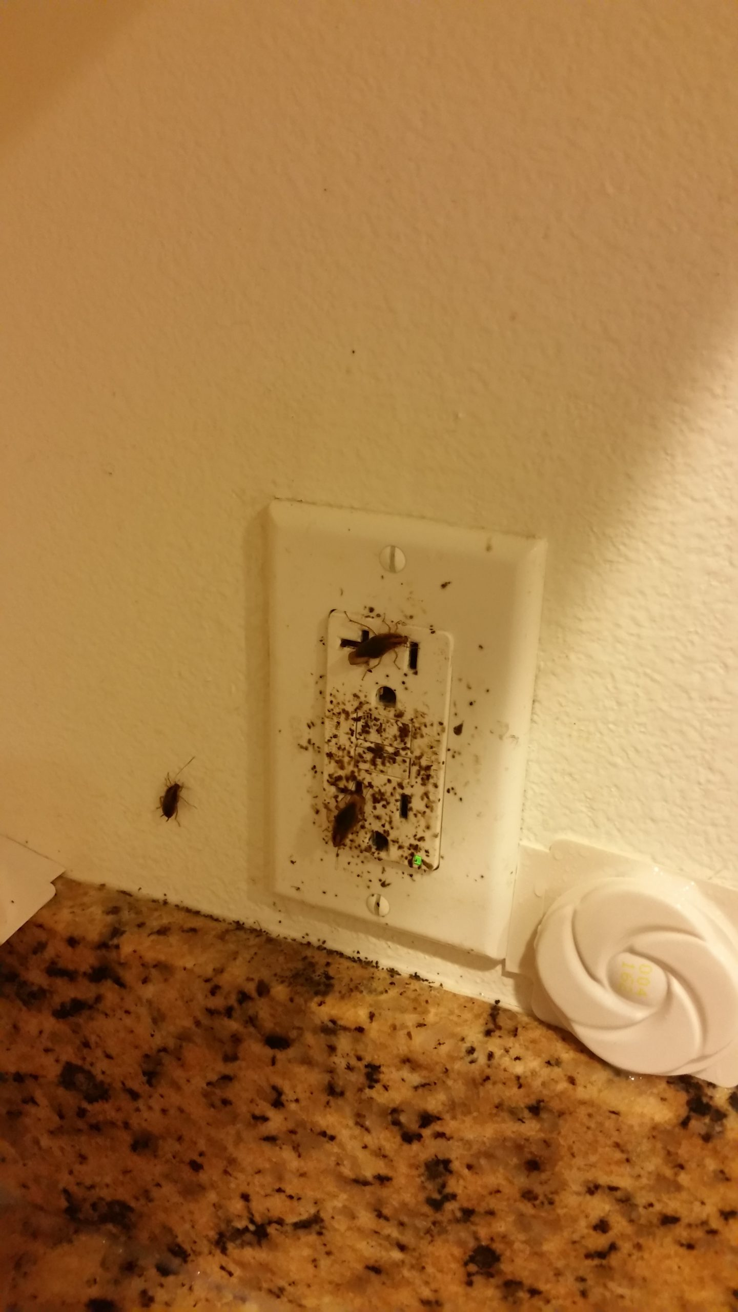 German Cockroaches wall outlet.