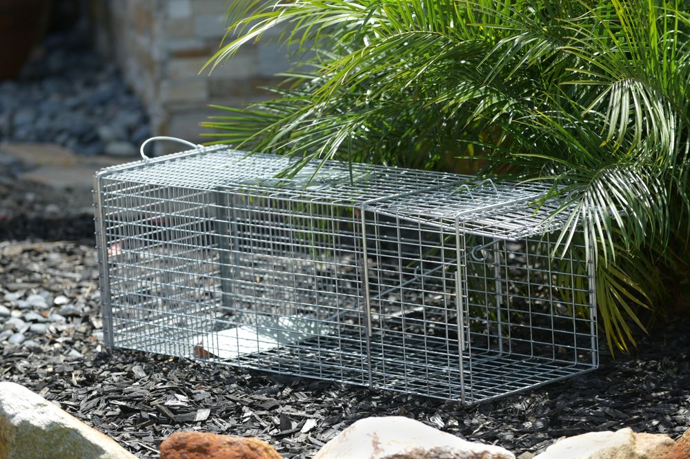 Live Animal Trapping 2of2.