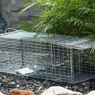 Pest Control - Live Animal Trapping - Raccoons, Possums & Skunks 2of2.