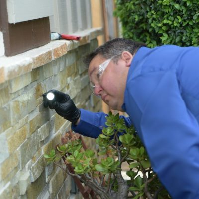 Pest Control - General Pests - Inspections - Ants, Bed Bugs, Fleas, Spiders, Rodents, (Rats & Mice), Cockroaches, & Termites.